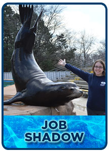 Animal Training Job Shadow