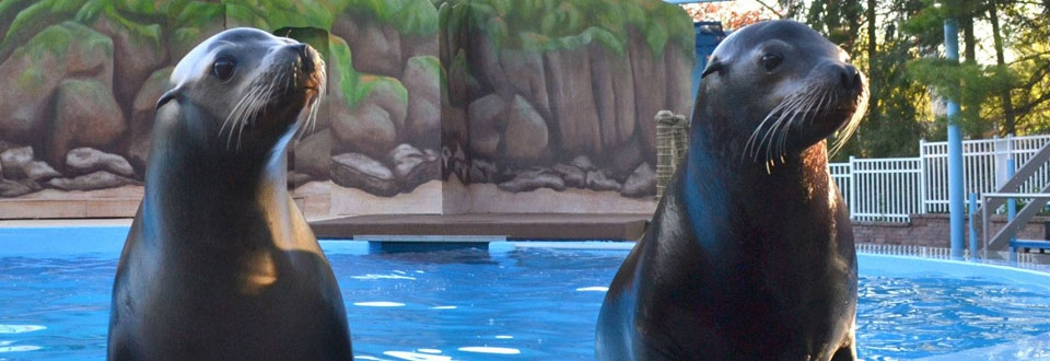 Our Sea Lions - Ocean Connections
