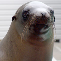 A sea lion at our kids' day camp in Milwaukee, WI
