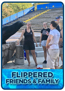 Flippered Friends & Family