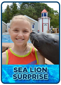 Sea Lion Surprise Day Camp