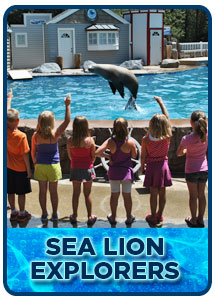 Sea Lion Explorers